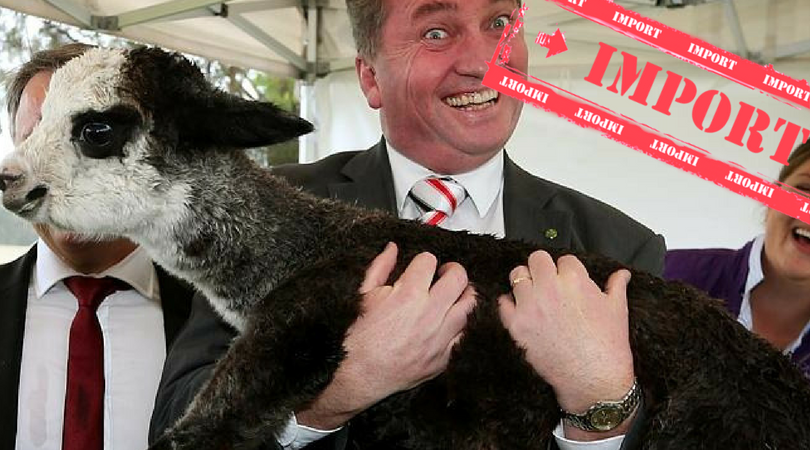 Barnaby Joyce to relaunch party as 'The Multinationals'