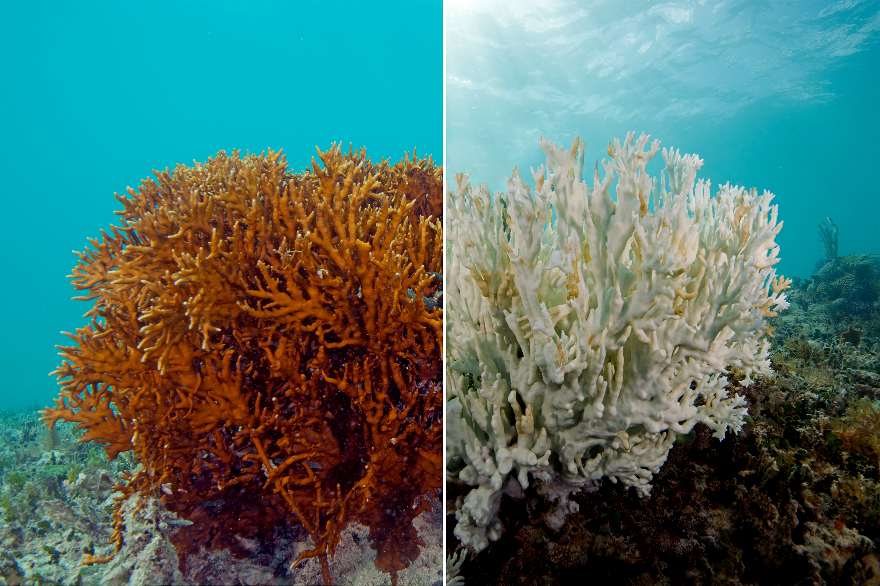 When the great reef becomes a great responsibility: Reversing our legal and moral failures