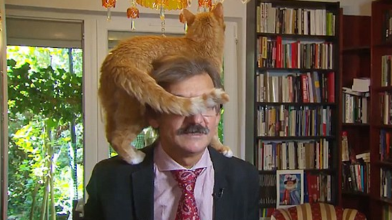 Cat cares not for Poland's problems, ruins interview