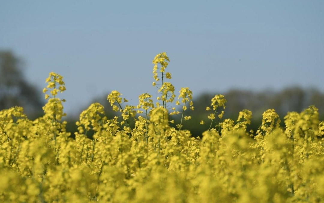 MustGrow: An organic pesticide that's truly cutting the mustard