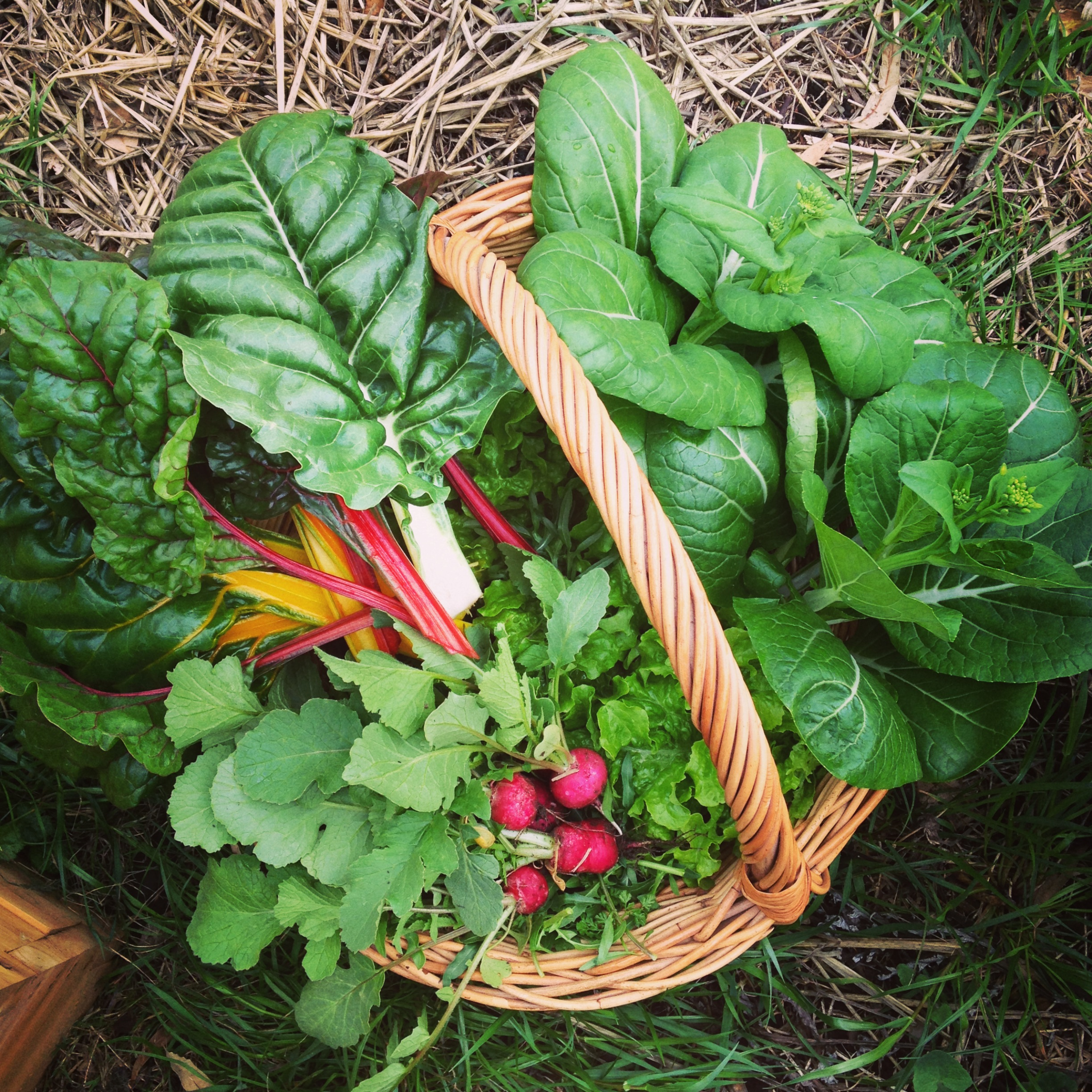 Turning your black thumb green: Four edible plants anyone can grow