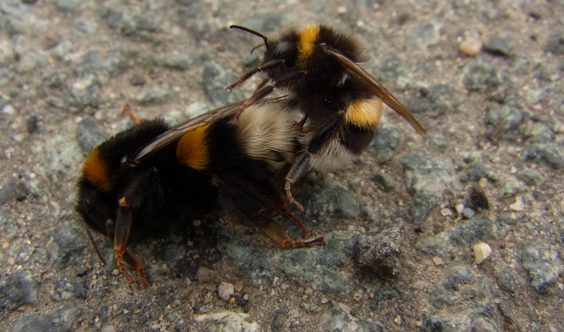 Reproduction: The birds and bees…and lab flies?