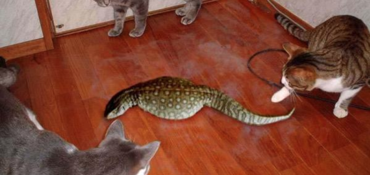 Japan's bunyip: The hunt for the mysterious Tsuchinoko