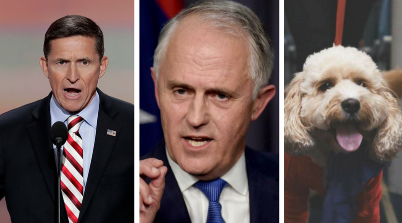 Current Affairs Wrap: Trumble's immunity fumble, Turnbull's polarising week, dem April Fools