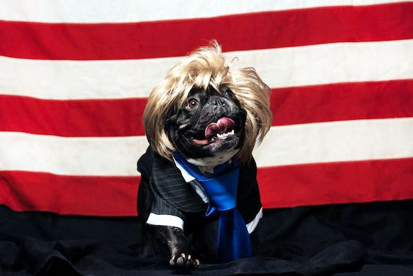 Meet the dogs of the 2020 presidential campaign