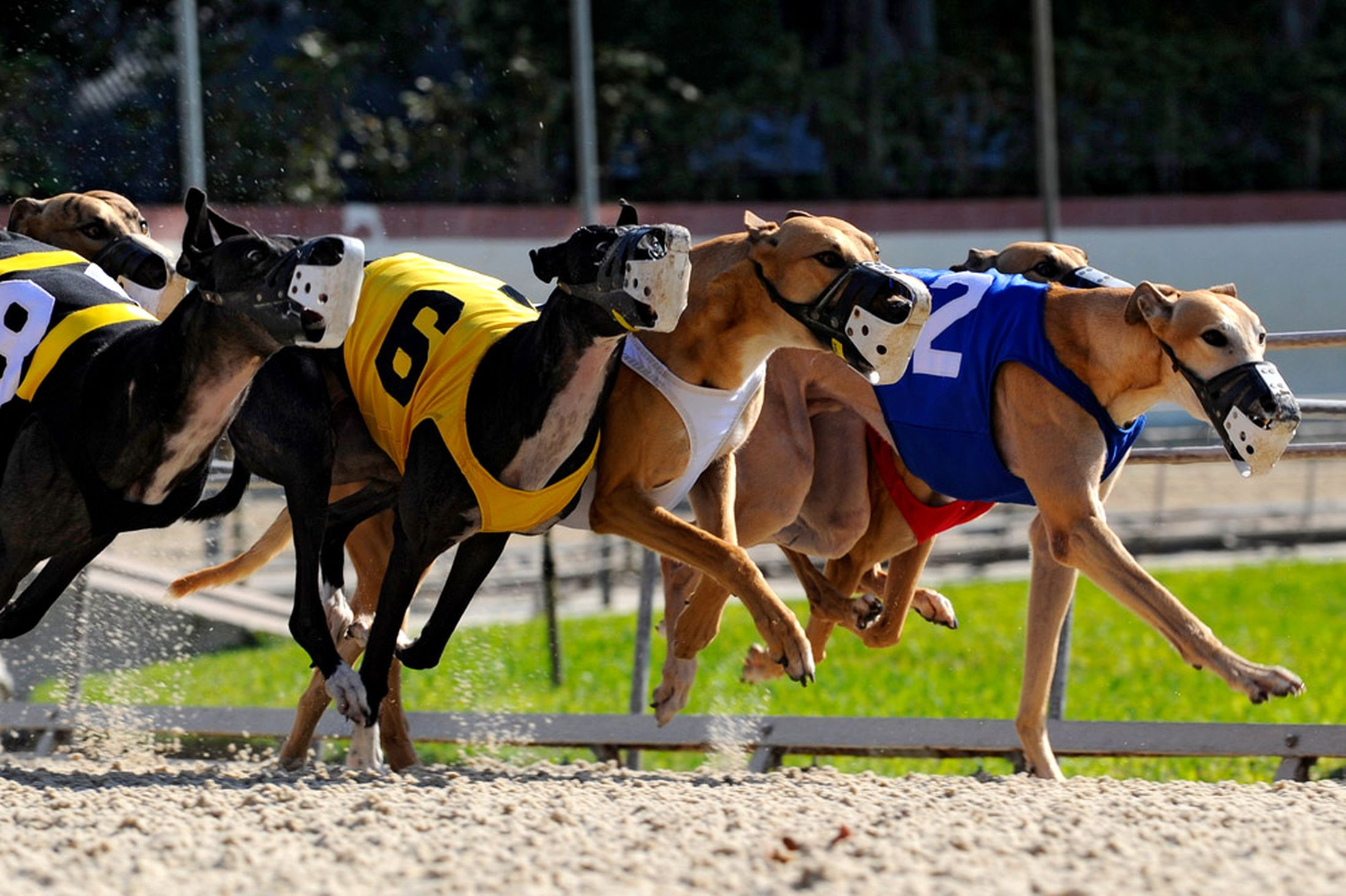 Greyhound ban makes the exception the rule