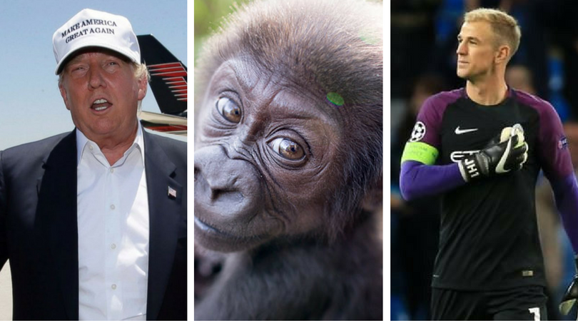 While you were asleep: Trump in Mexico, Transfer Deadline Day, Internet names Gorilla