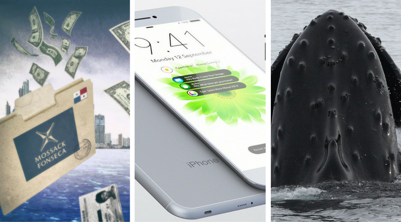 While you were asleep: Apple's wireless headphones, Denmark buys PP, Humpbacks not endangered