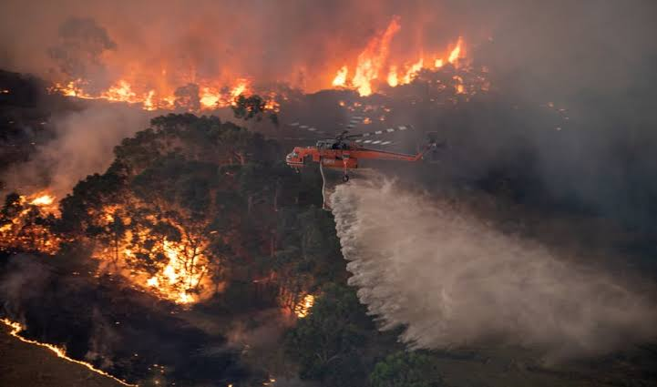 It's impossible to think of anything but the bushfires