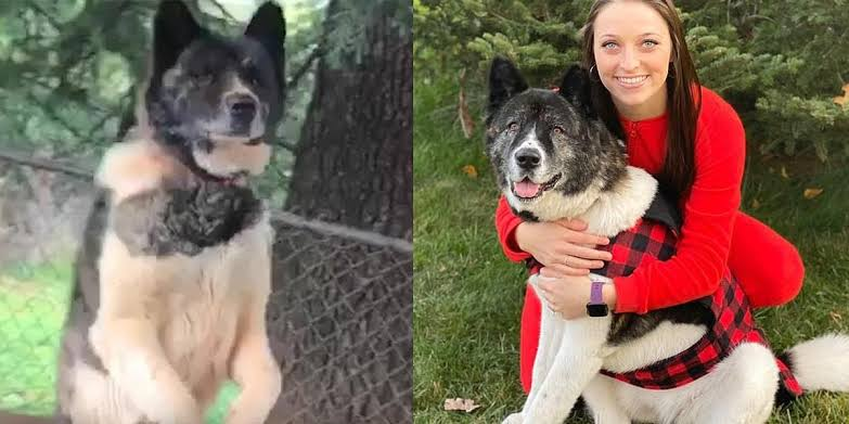 After feeding a neglected dog for a year, this woman was able to adopt her new best friend