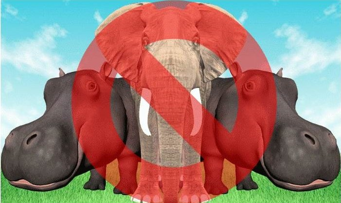 How the Elephant and the HiPPO will ruin your project – if you let them!