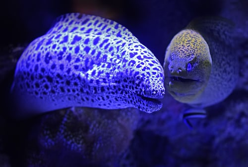 Lonely eels in your area: This aquarium wants you to chat up their fish