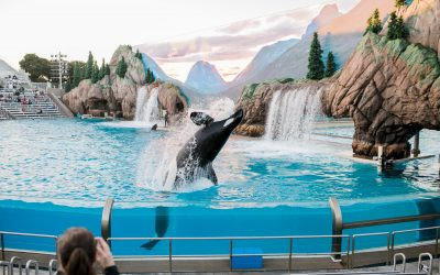 TripAdvisor pulls support for venues featuring captive animals