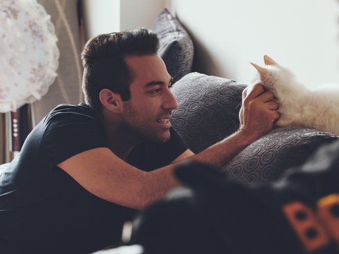 When dudes add cats to their dating apps: an investigation