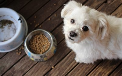 Our dogs won't help us find food, study discovers