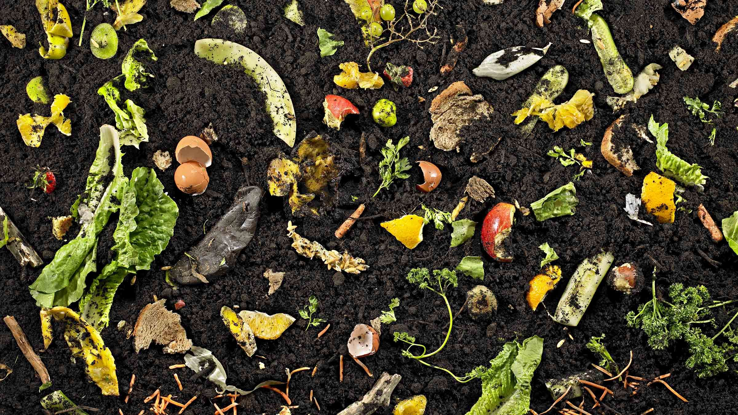TBS Next Gen: Composting, not a pile of rubbish