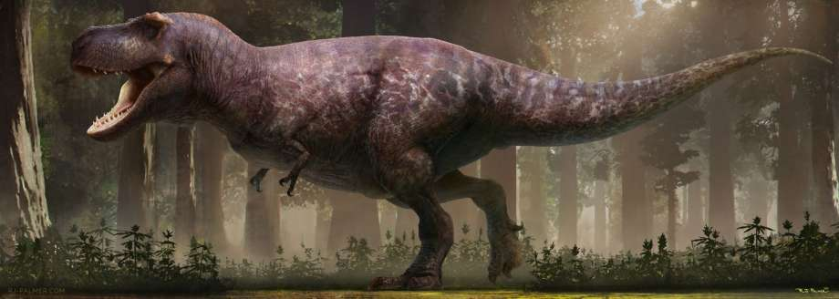 Large and in charge: The T-Rex was actually fat