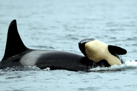 Lessons in death from the Orca that made us feel